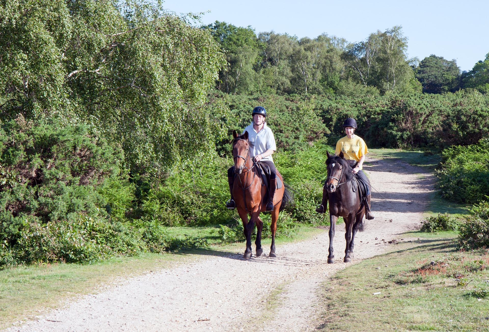 Ein Pferd – mehrere Besitzer – worauf du schon vorher achten solltest