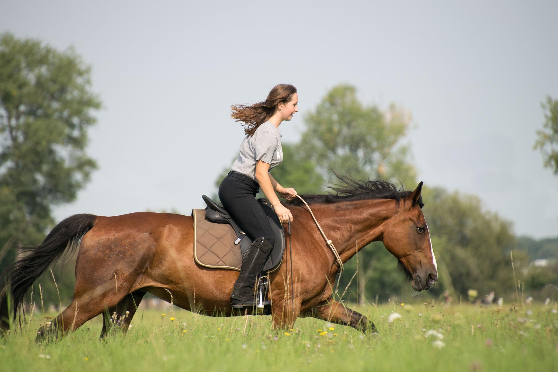 Meine Freundin hat ein Pferd – hilfreiche Tipps aus einer glücklichen Beziehung