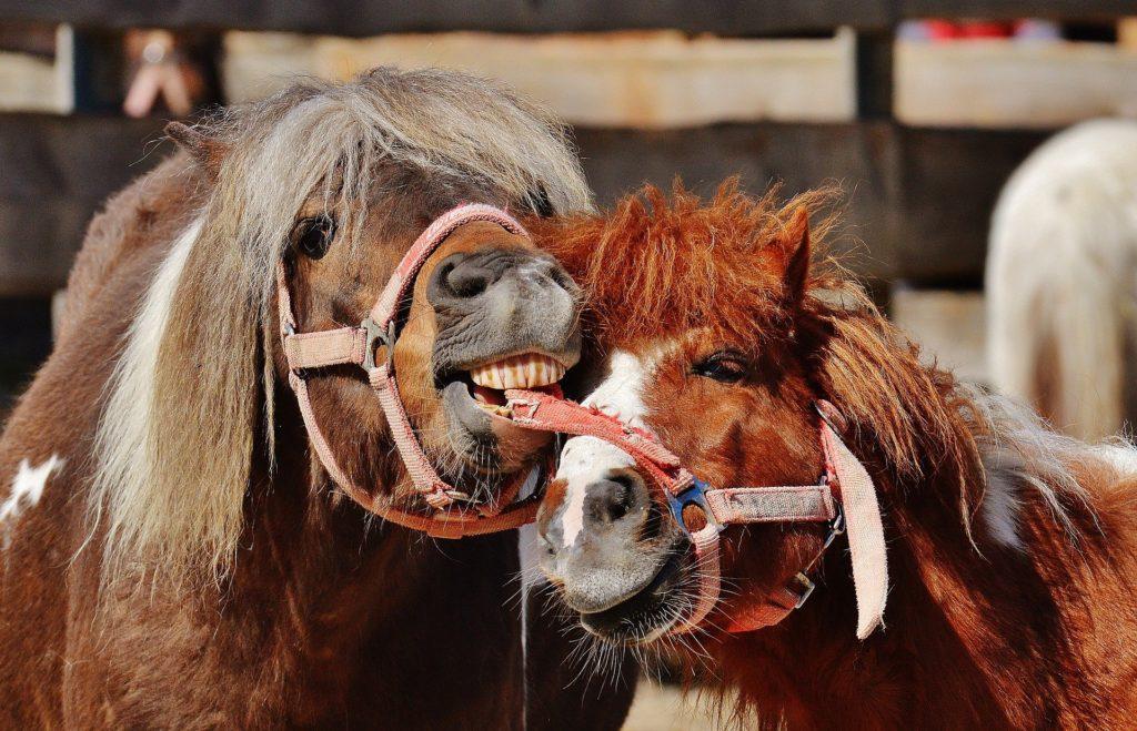 pferdekauf-fragen zur erziehung