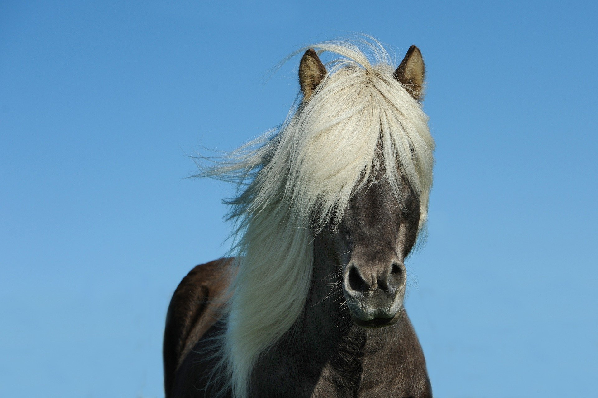 Pferdemähne schneller wachsen lassen – der Faktencheck