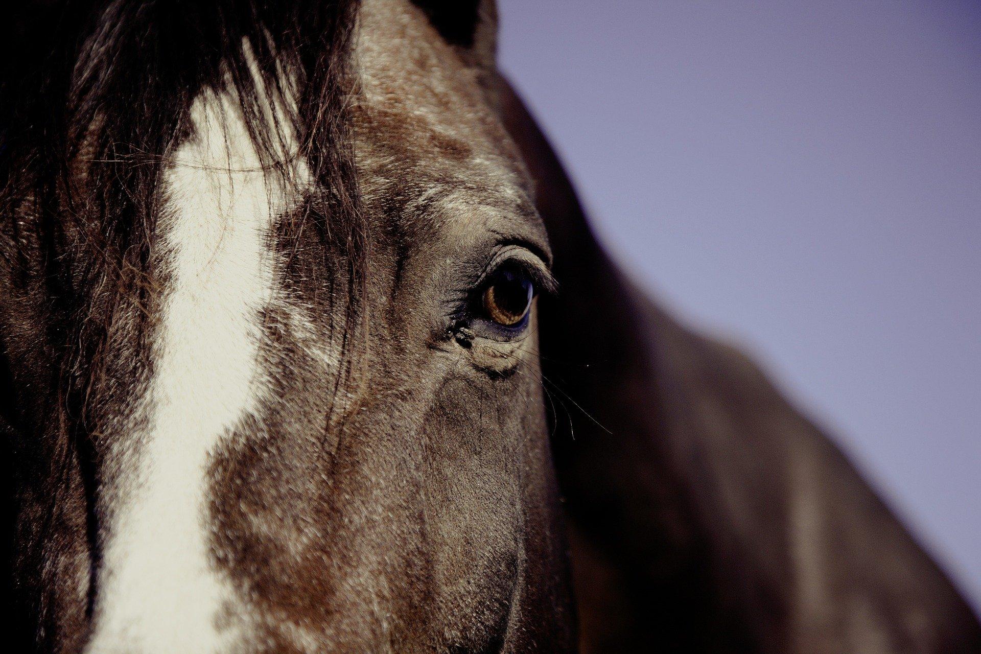 Grundausstattung Putzzeug Pferd – alle Bürsten in der Übersicht