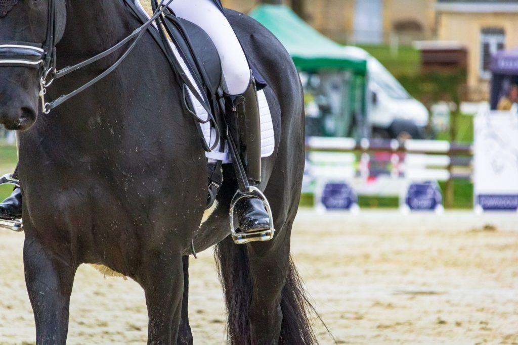 pferd eindecken fürs training