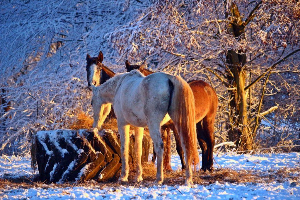 pferd friert im offenstall