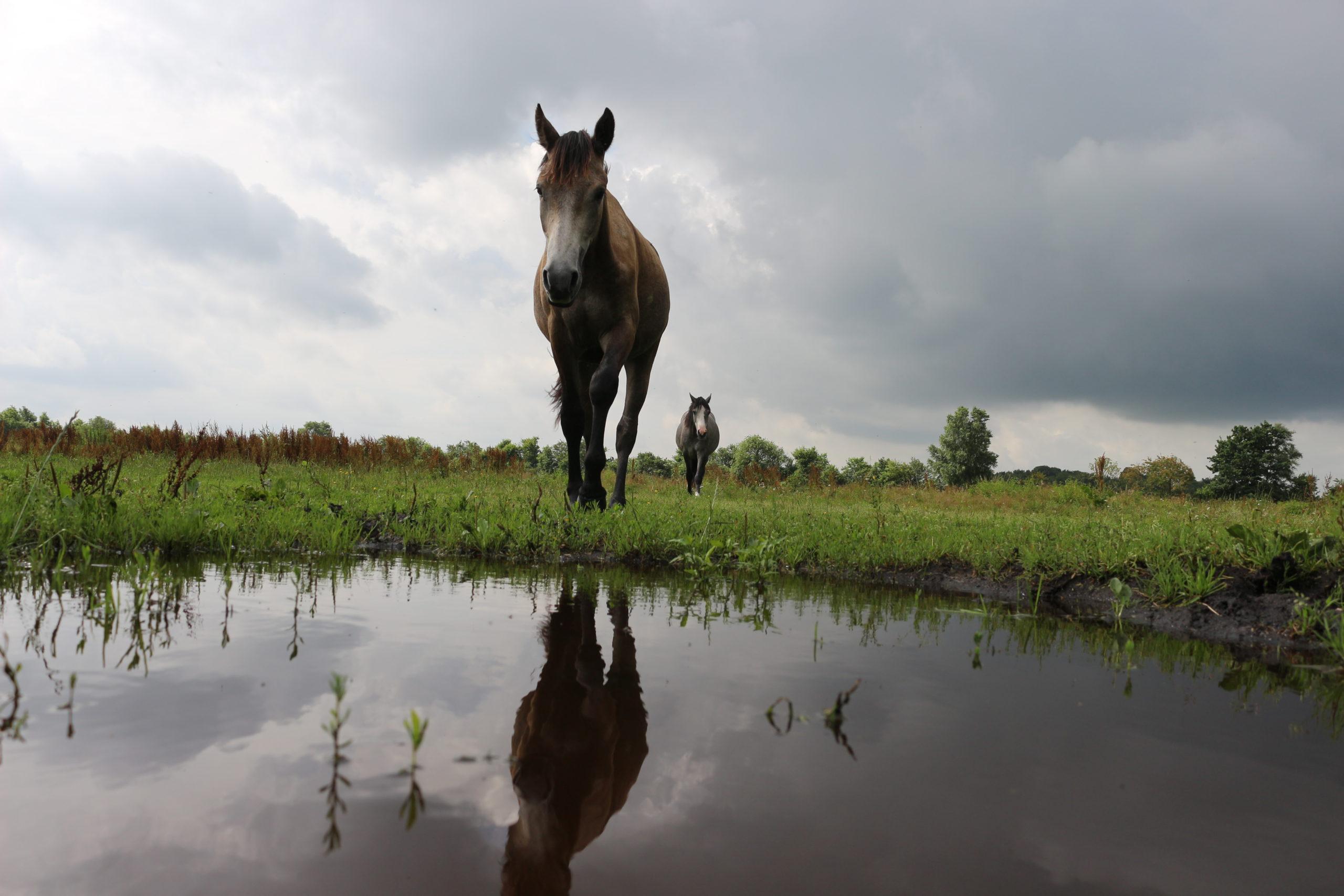 Pferde fotografieren – Einfache Tipps für spektakuläre Ergebnisse