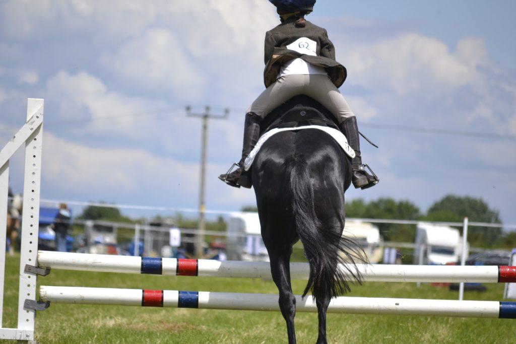 pferdekauf-fragen zum reiten