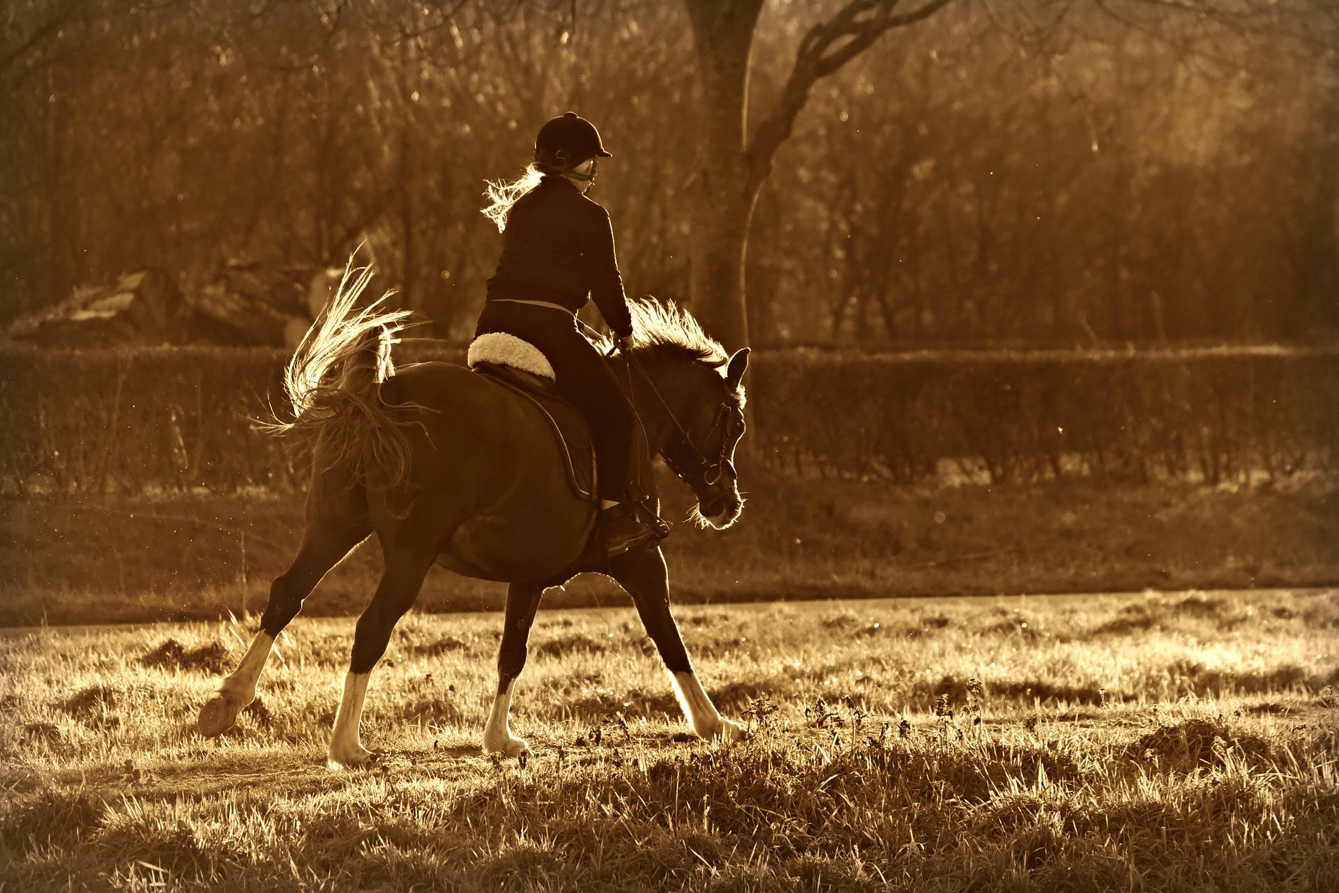 Pferd schlägt beim Reiten mit dem Schweif