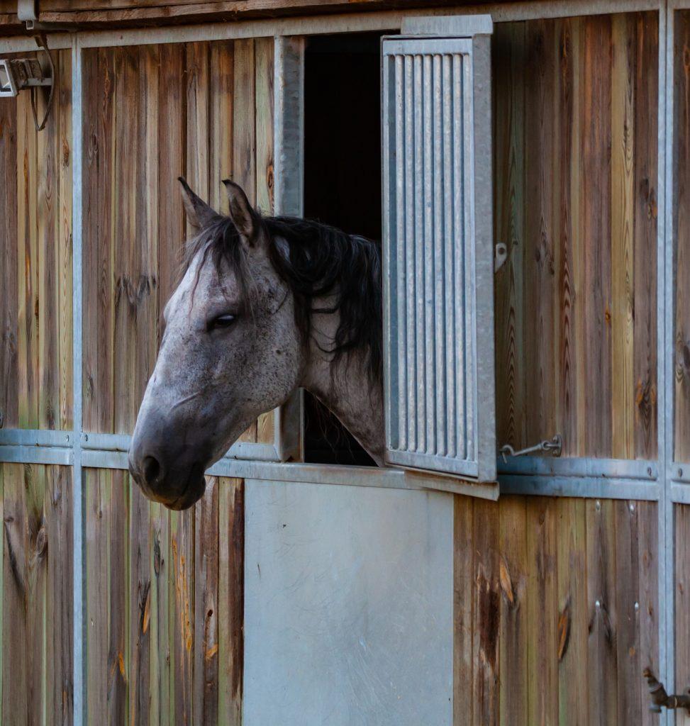 pferd kaufen als anfänger
