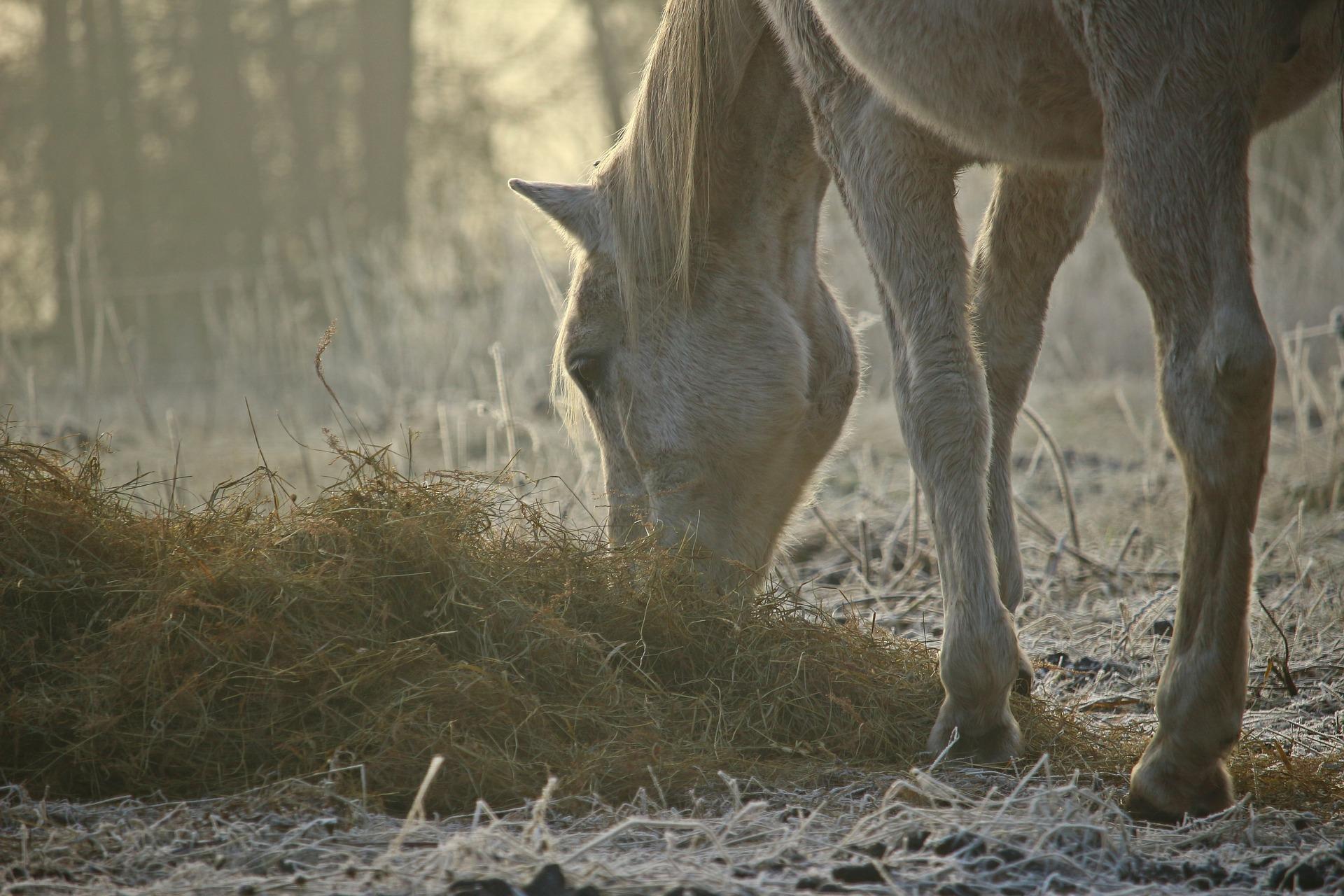 Was ist artgerechte Pferdehaltung?