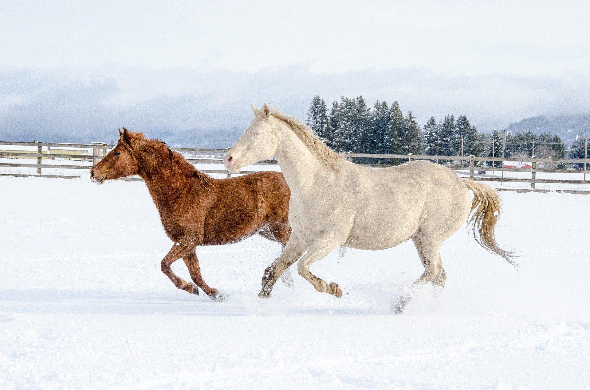 pferd friert