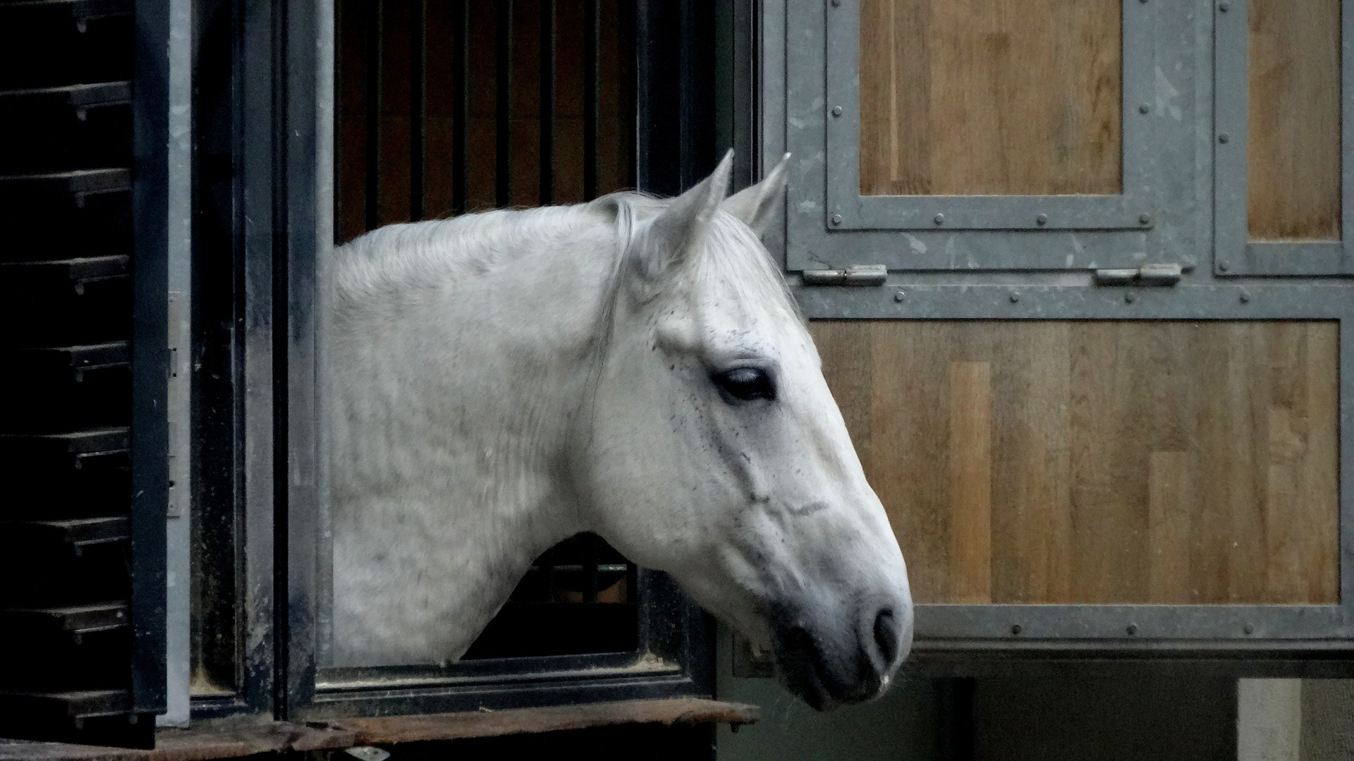 Pferd mag Boxennachbar nicht