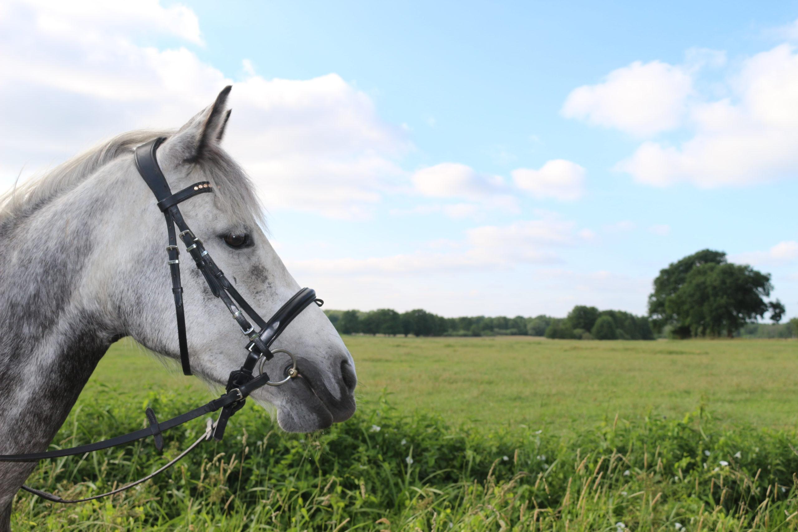 Pferd im Gelände vom Fressen abhalten