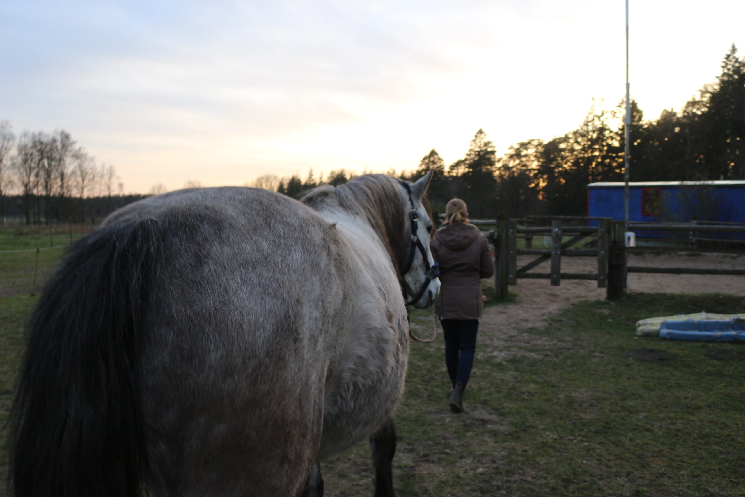 10 Dinge, die du vor dem ersten eigenen Pferd wissen solltest