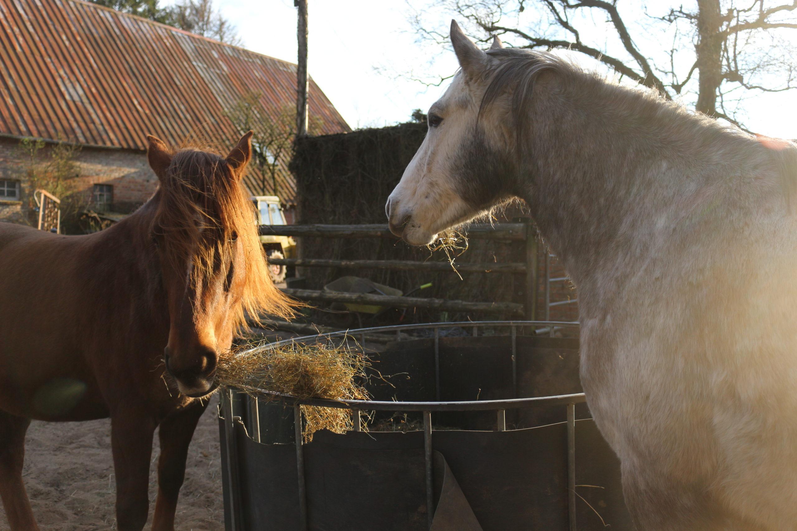 Neues Pferd probereiten – mit Checkliste