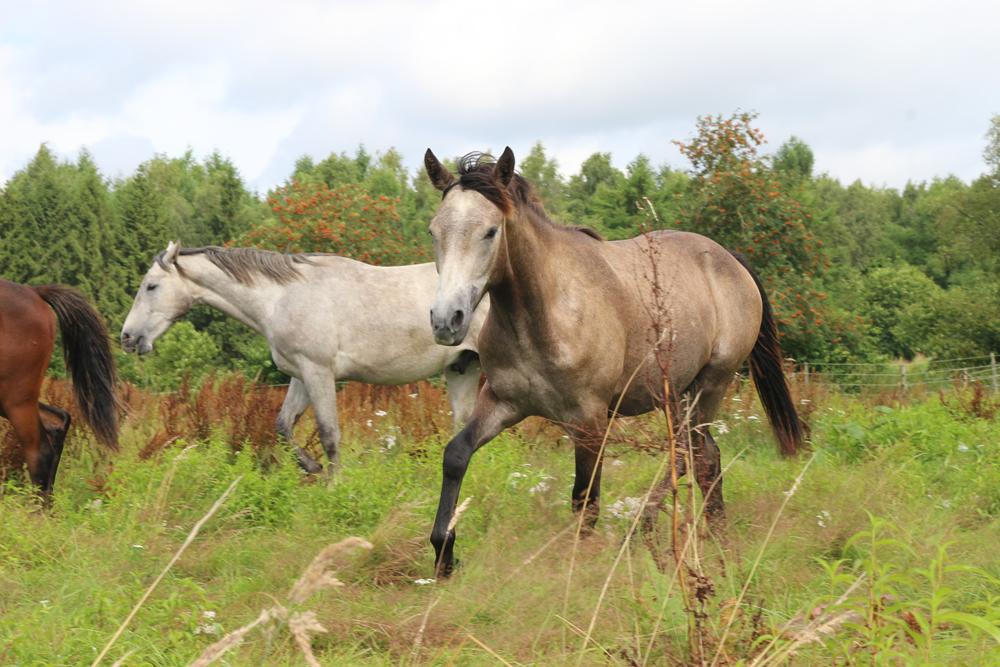 Welches Pferd eignet sich als Freizeitpferd?