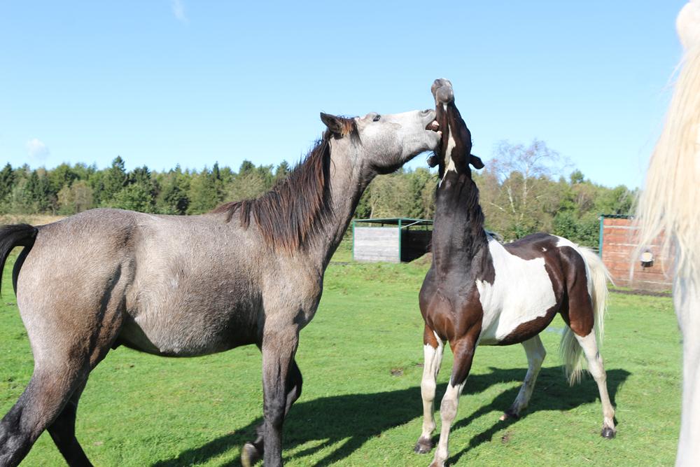 Wie Lange Trägt Ein Pferd