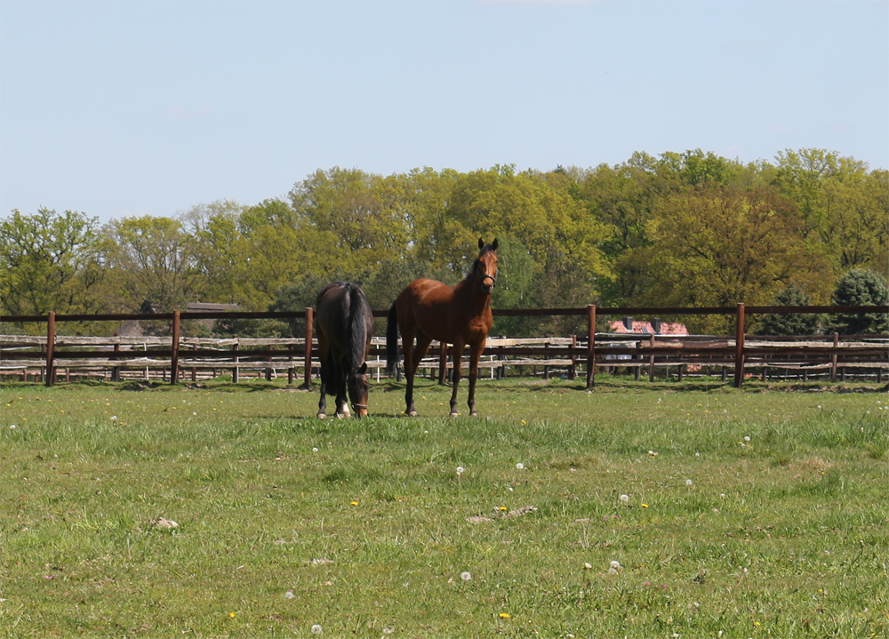 Pferd in neue Herde integrieren