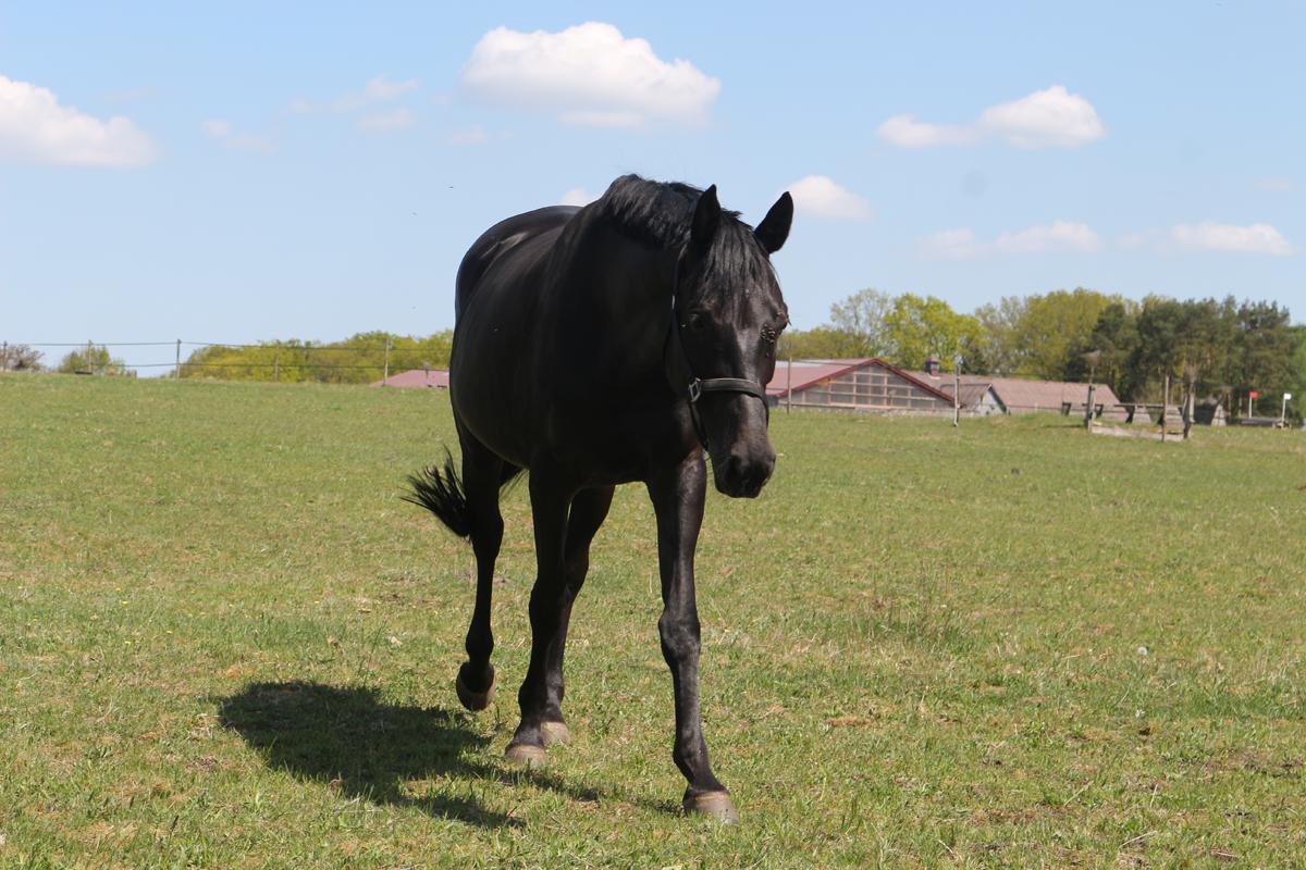 Pferd will nicht auf die Weide – mögliche Gründe