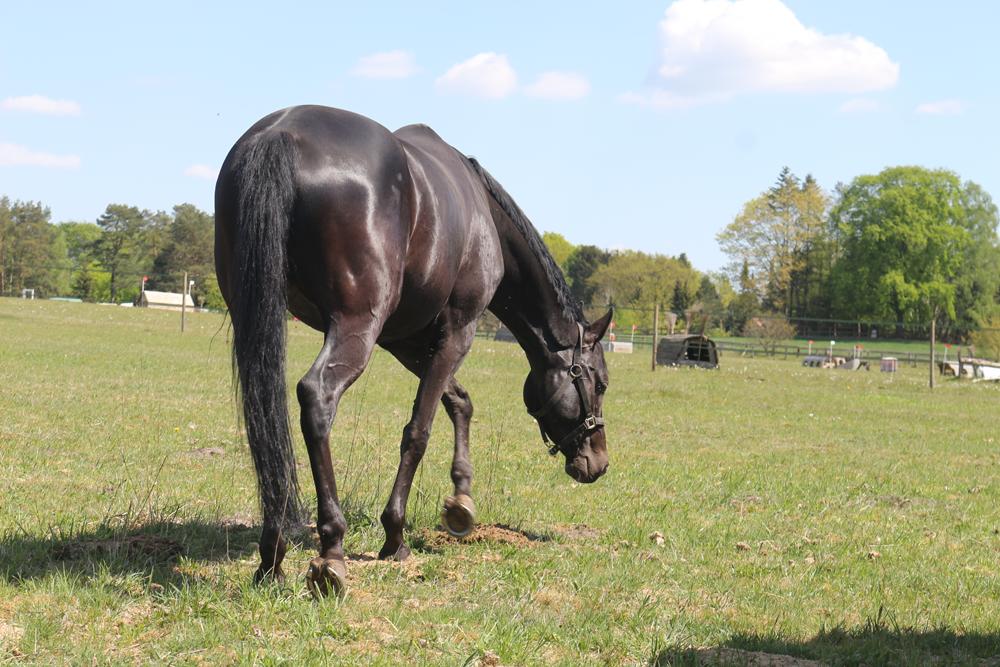 Tipps für glänzendes Pferdefell