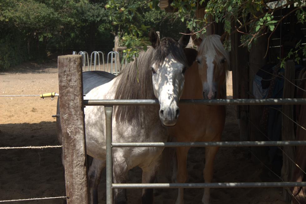 So oft solltest du dein Pferd putzen
