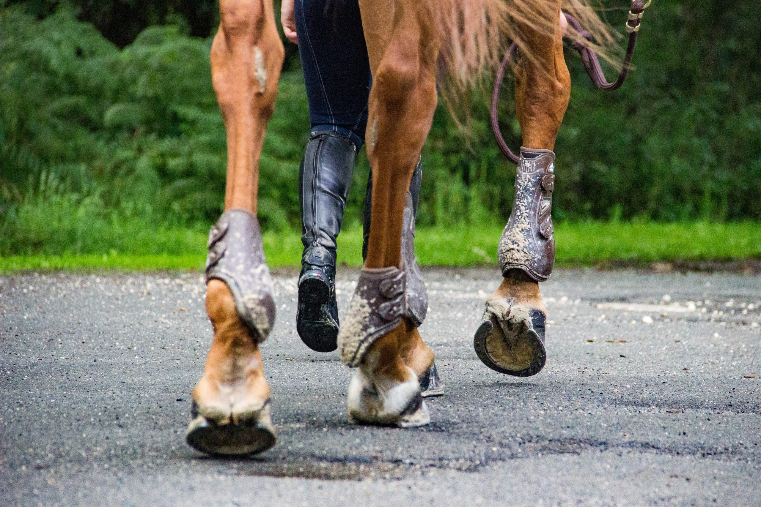 Mauke beim Pferd: Ursachen, Vorbeugung und erfolgreiche Behandlung