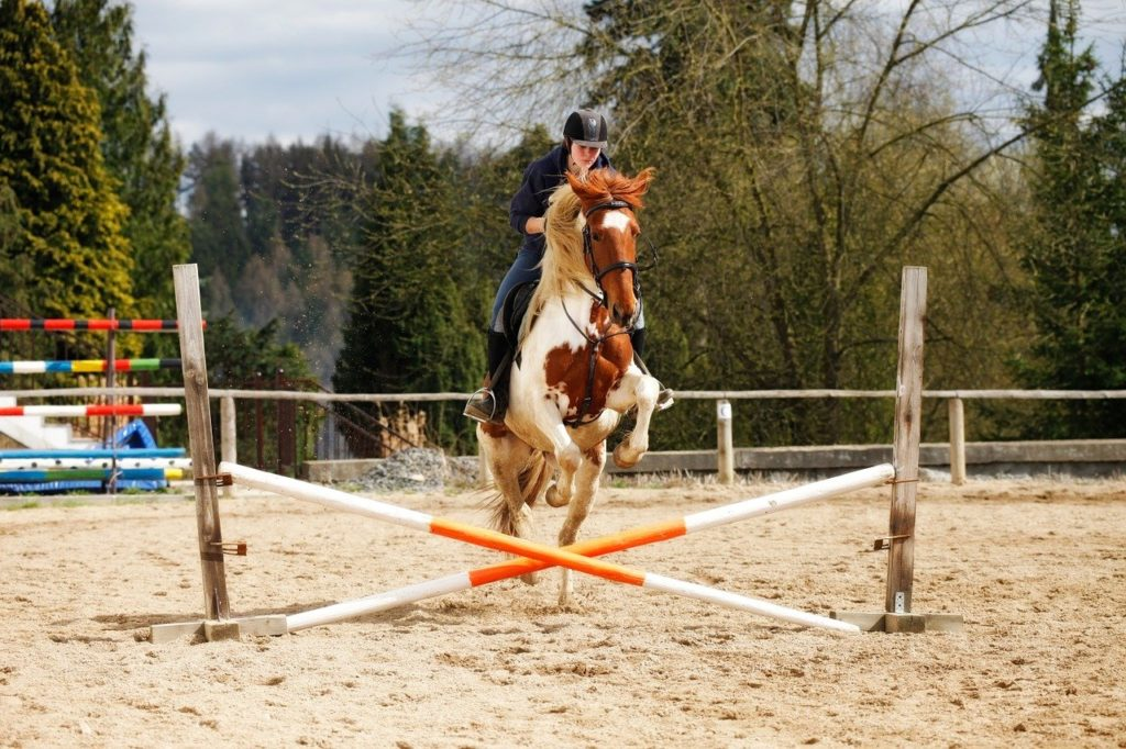 horse, jump, obstacle