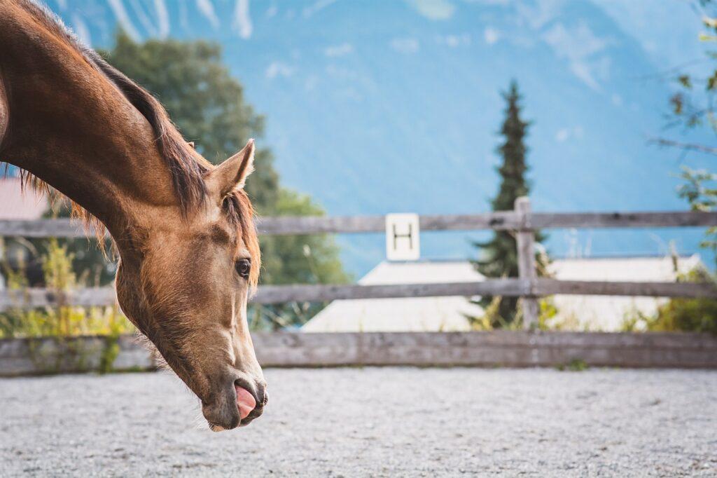 horse, foal, head-6588972.jpg